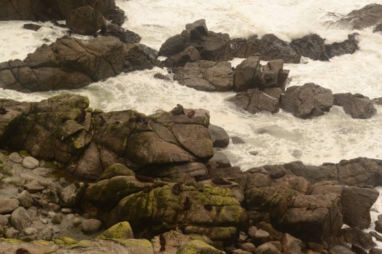 Westport, New Zealand: Stormy seas at the Fur Seal colony