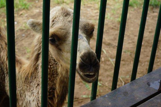 Qinghuang Island Wildlife park : Покормите меня