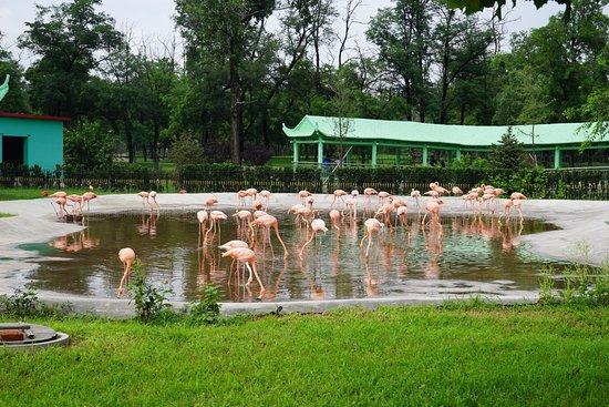 Qinghuang Island Wildlife park : Фламинго