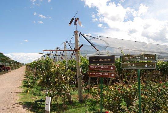 Casa del Visitante - Familia Zuccardi: viñedos