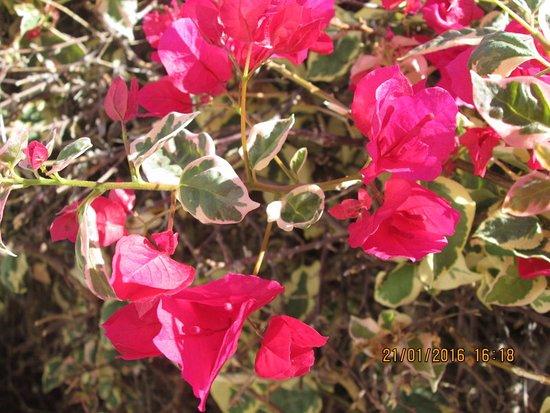 Foto de Ona Sueño Azul