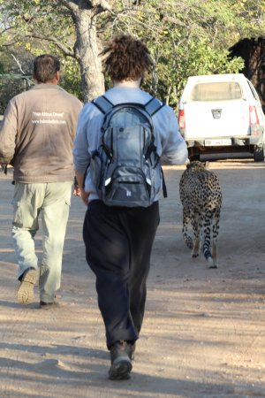 Hazyview, Afrika Selatan: Walking with cheetahs