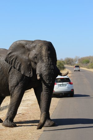 Hazyview, South Africa: Elephant giving us the eye