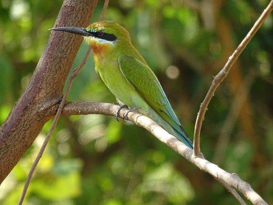 Uda Walawe National Park, Σρι Λάνκα: photo0.jpg