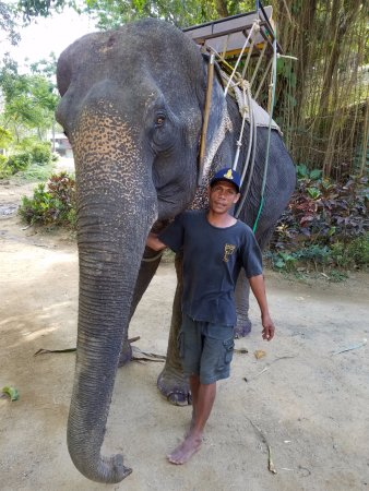 Kok Chang Safari Elephant Trekking: Our elephant and guide