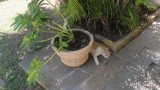 Lauro de Freitas: Our resident hotel cat