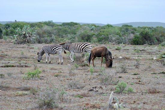 Addo, Güney Afrika: Im Gelände hinter der Lodge