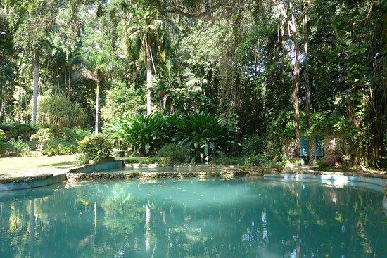 Shaw Park Gardens & Waterfalls : Pool