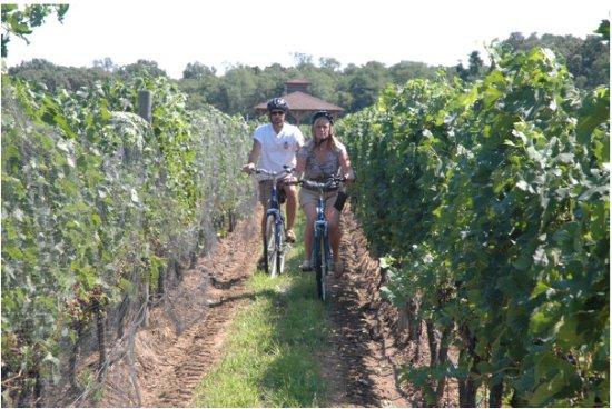 Mattituck, نيويورك: Riding thru a Vineyard