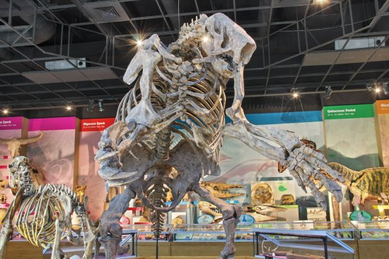Jackson, MS: Explore an entire wall of fossil specimens, Zygorhiza, Mosasaurus, and a giant Sloth!