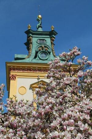 Muzeum Pałacu Króla Jana III w Wilanowie: Piękne magnolie