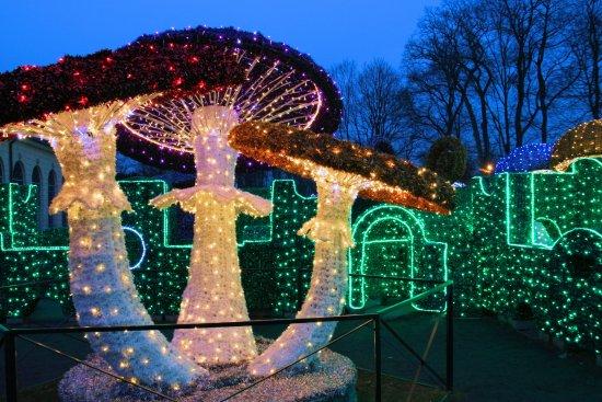 Muzeum Pałacu Króla Jana III w Wilanowie: Zimowy Park światła