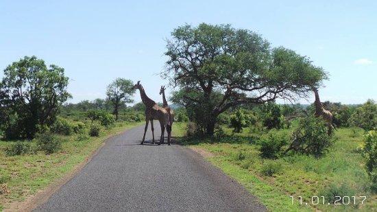 Mkuze, جنوب أفريقيا: On game drive