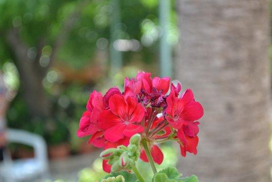 Elliniko, Grecia: Garden