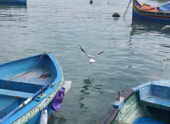 Marsaxlokk, Malta: LA PESCA DEL GABBIANO