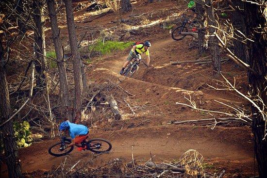Majura Pines Mountain Bike Trails
