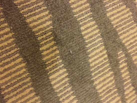 Kankakee, IL: bugs on the carpet