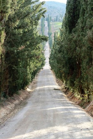 Tenuta Della Selva