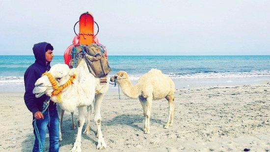 SENTIDO Djerba Beach: photo4.jpg