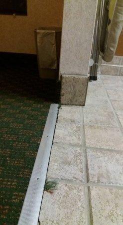 Georgetown, TX: Carpet in the room. Room 221.