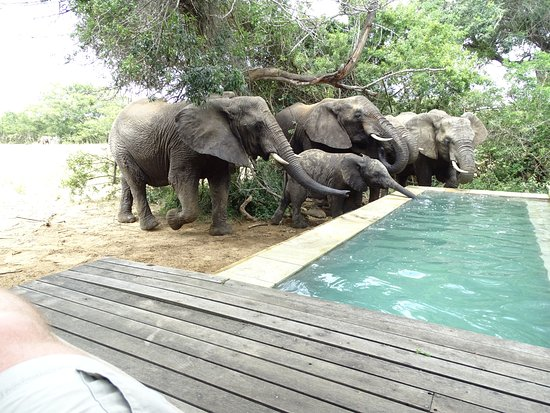 Phinda Private Game Reserve, Afrika Selatan: At our suite's own deck pool