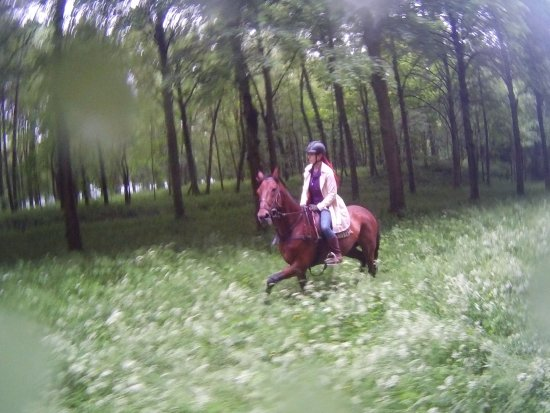 Gif-sur-Yvette, Francja: Riding through the wildflower fields in the park surrounding Versailles