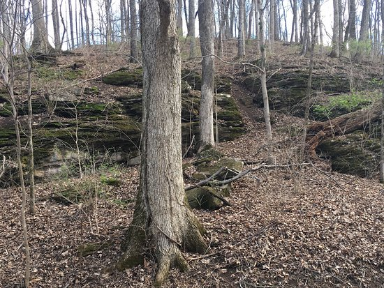 Edwin and Percy Warner Parks: Nice rock outcropping