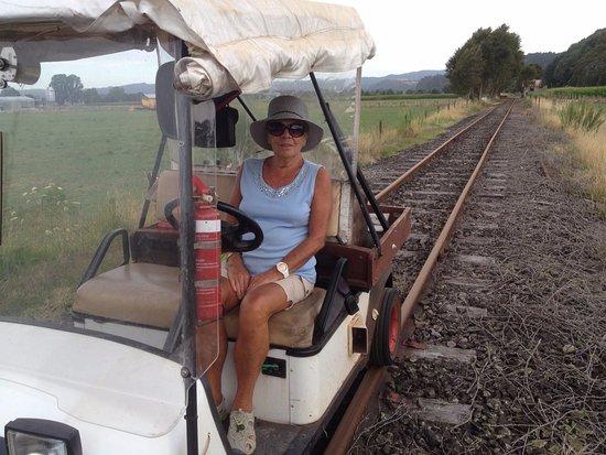 Whakatane, Yeni Zelanda: Any one can drive the buggy