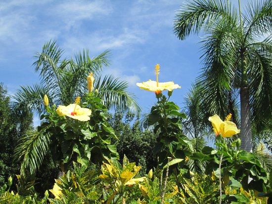 Capitão Cook, Havaí: Beautiful flowers