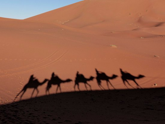 Morocco Explored - Day Tours: Our caravan