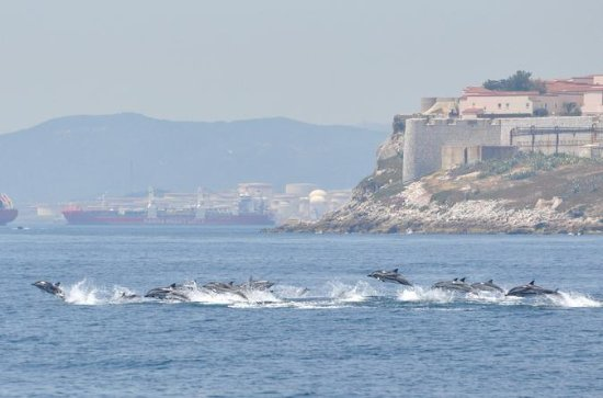 Dolphin Watching Excursion in...