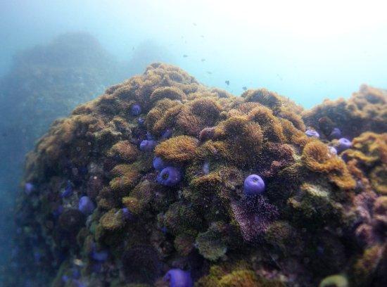 Rawai, Ταϊλάνδη: Marine life