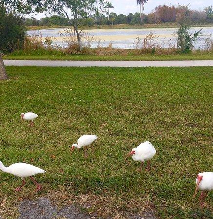 Lake Worth, FL: photo1.jpg