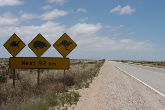 Eucla, Australia: Local wildlife you may encounter