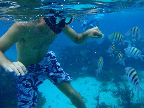 Ixtapa Island (Isla Ixtapa): snorkel en playa las gatas...ecotours-ixtapa.com