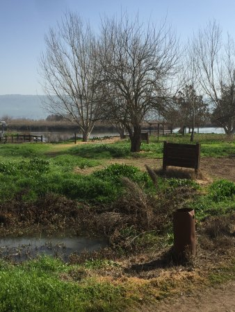 Galilee, Israele: אגמון החולה
