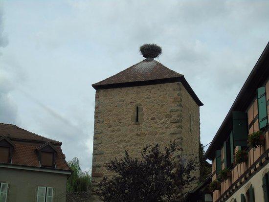 Dambach-la-Ville, Francia: nid de cigognes