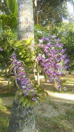 Palmgrove Lake Resort: Flora worth watching