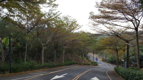 เดอะซันฮอทสปริงรีสอร์ท: 飯店入口的纜仁樹