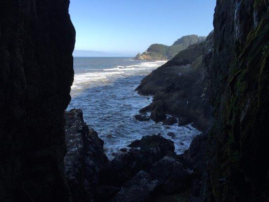Sea Lion Caves 사진