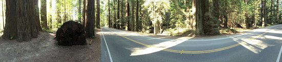 Humboldt County, Californie : Avenue of the Giants