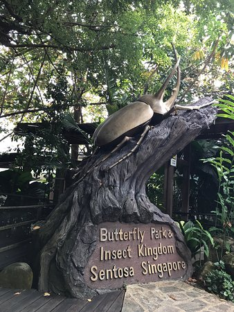 Butterfly Park & Insect Kingdom : 意外と小さな施設で、少しビックリしました。見所はあまりありません