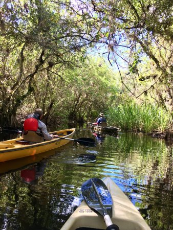 Everglades Area Tours: photo1.jpg