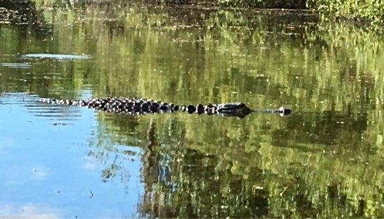 Everglades Area Tours: photo3.jpg