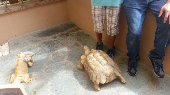 Aquaworld Aquarium & Reptile Rescue Centre: ...macht platz ::)