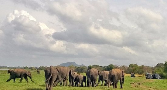 Habarana, Sri Lanka: www.travelnowsrilanka.com @kaudulla sri lanka