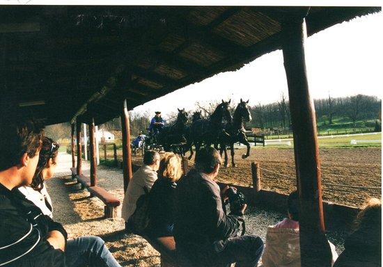 Lazar Equestrian Park - Godollo.