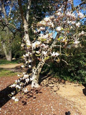Aiken, Νότια Καρολίνα: flowering scrub