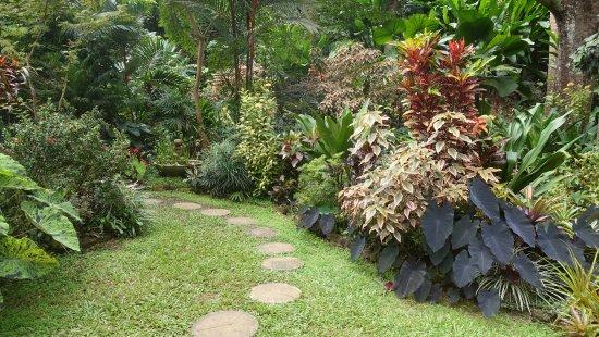 Hunte's Gardens: Garden