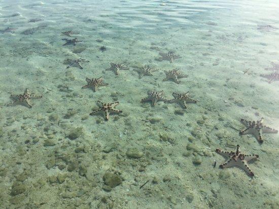 Busuanga Island, Philippines: etoile de mer
